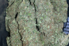 Buy white Russian strain